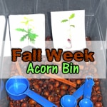 sensory activities for preschoolers: acorn bin