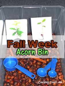 sensory activities for preschoolers: acorn bin