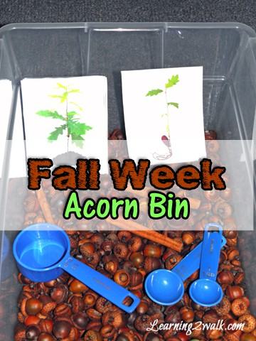 sensory fall activities for preschoolers: acorn bin