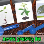 fall activities for preschoolers-sensory activities for preschoolers: acorn bin