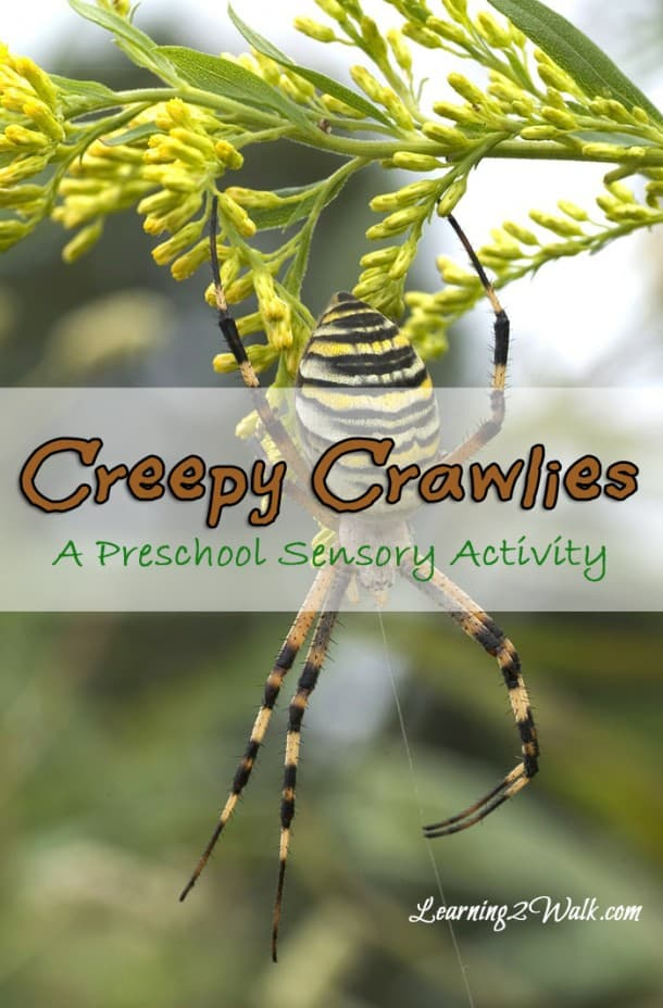 preschool lesson plan creepy crawlies lesson plan with a preschool sensory activity