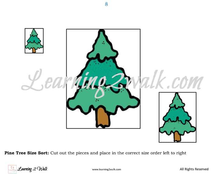 Pine Tree Parable Preschool Kit size sort