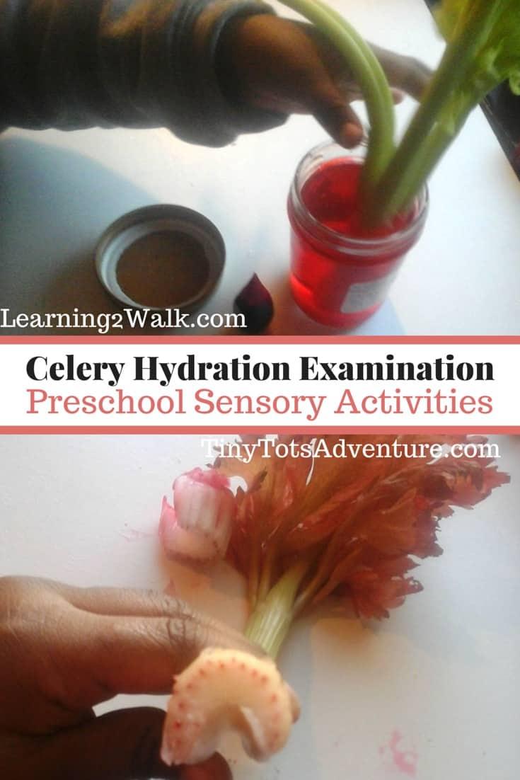 celery hydration examination