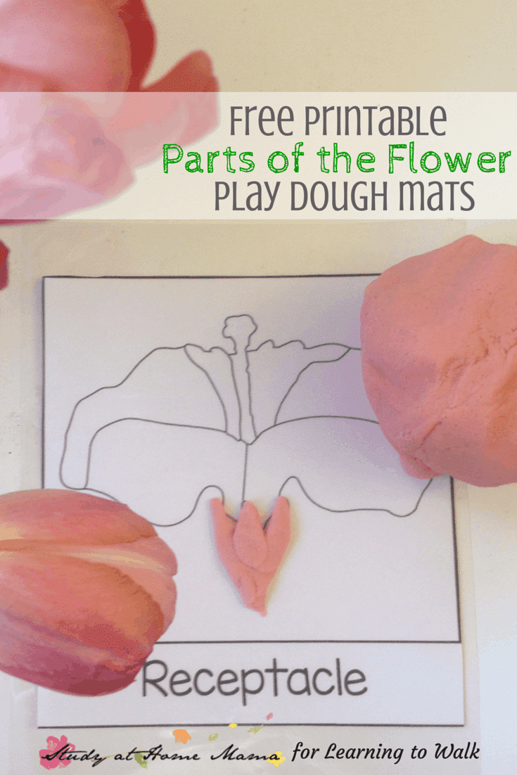 flower unit study with free parts of a flower playdough mats.
