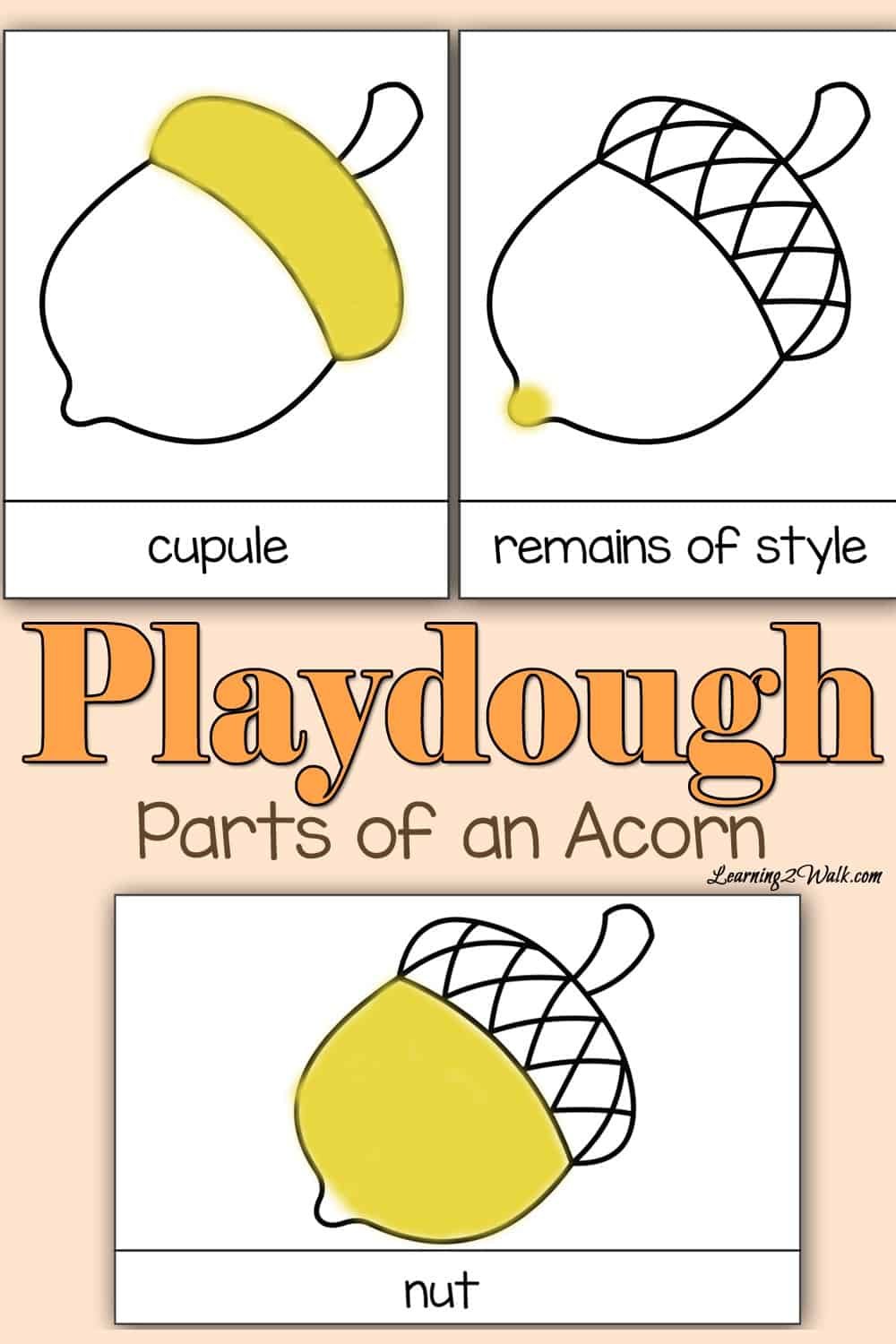 Want to learn the parts of an acorn? Why not create a fun activity by adding playdough as a fun idea to the learning process?