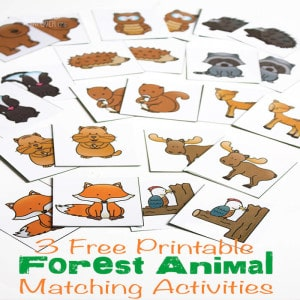 Forest-Animal-square