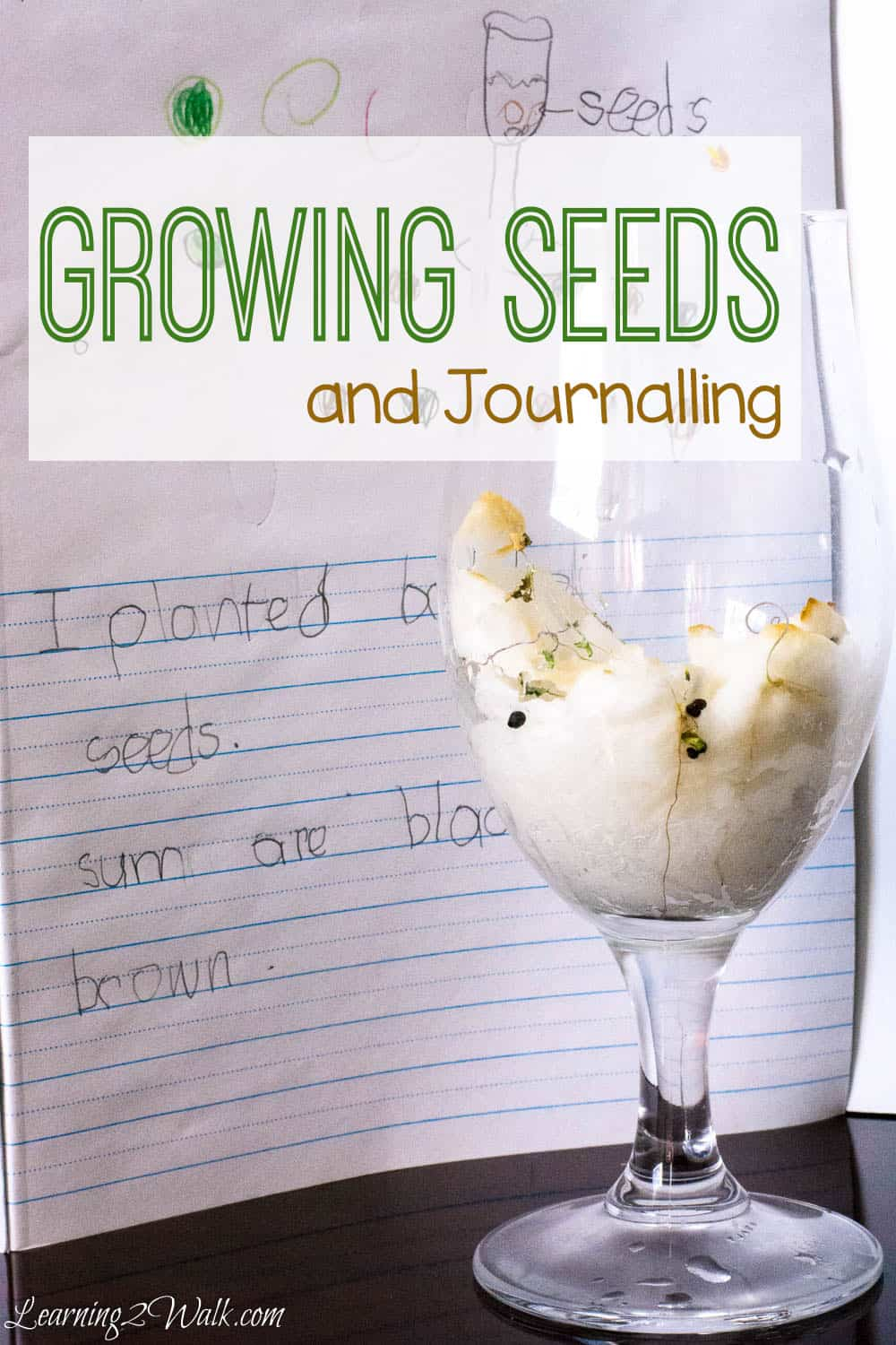 Allow your little scientist to plant observe and journal broccoli seeds while they grow- a fun seed science experiment for kids