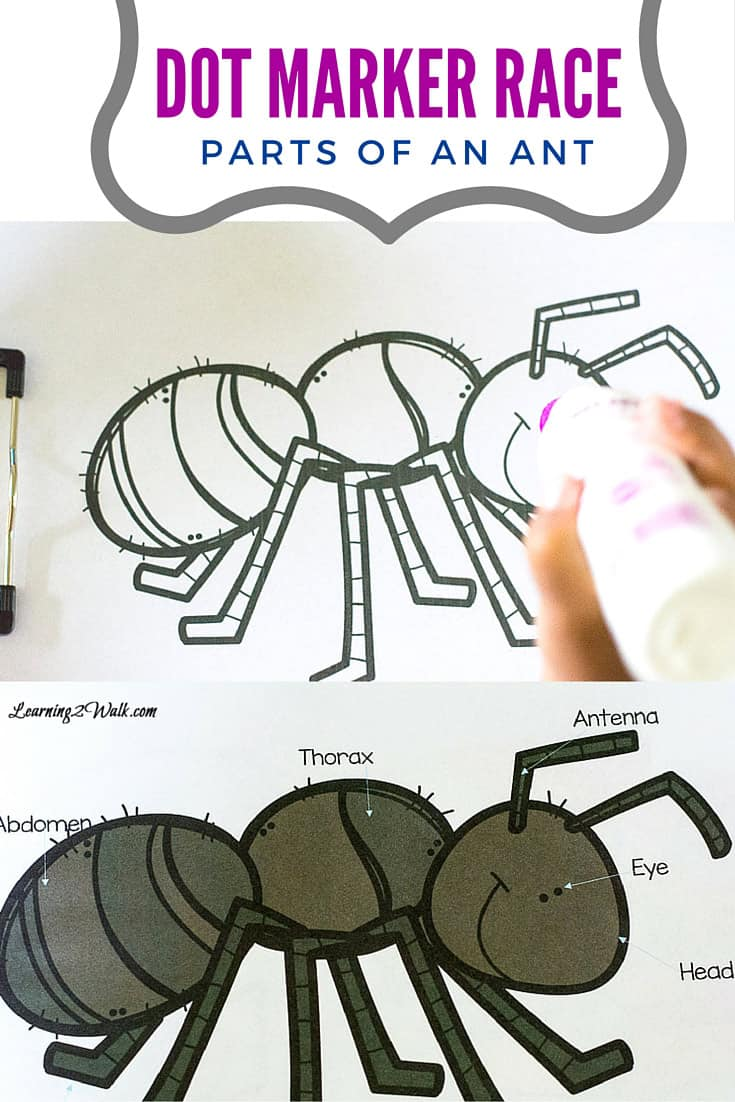 My kids love using dot markers and so this dot marker race to identify the parts of an ant was a fun game