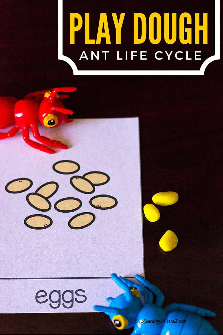 Adding play dough to any life cycle activity instantly makes it fun. This ant life cycle definitely delivered and the life cycle cards also helped as well.