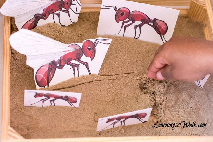 I love when a simple activity can help a child understand a concept. This simple ant small world allowed my daughter to learn the different roles of ants.
