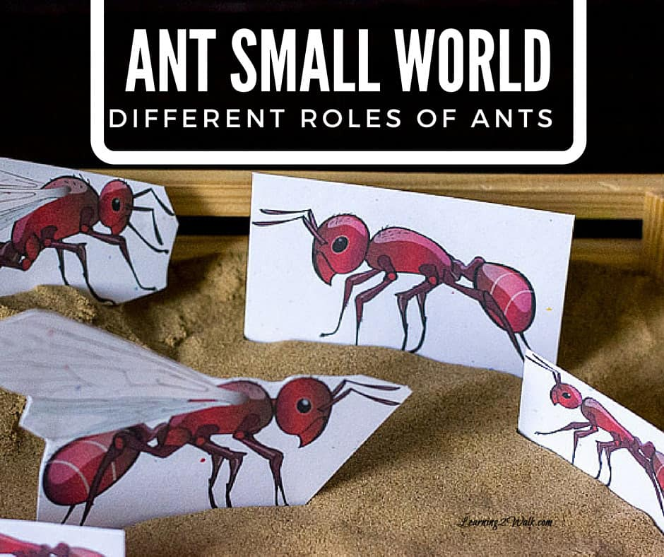 Ant small world showing the different roles of ants